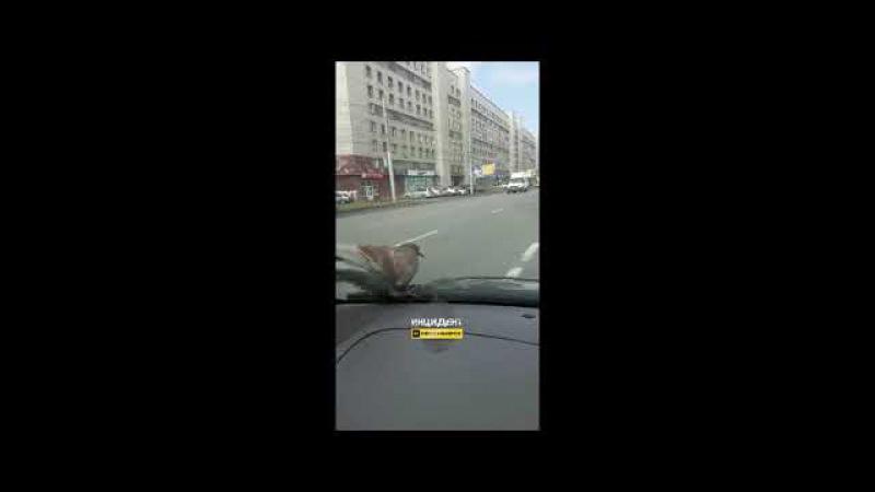 Безбилетный пассажир