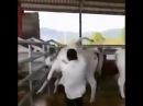 корова ударила пастуха