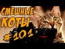 Смешные Кошки и Коты Приколы с Котами и Кошками ДО СЛЁЗ 2018 Funny Cats
