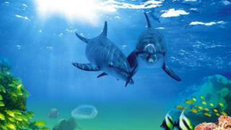 Поющие дельфины и киты Звуковая терапия Атмосфера подводного погружения Singing dolp...