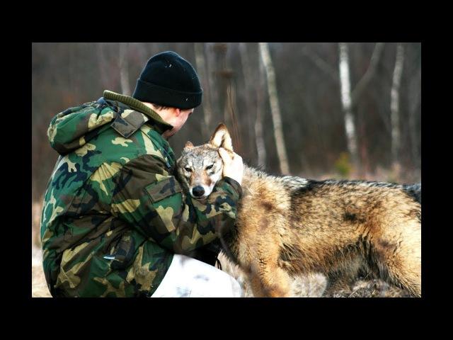 Волчица по имени Дайя Очень трогательный фильм