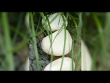 People Who Find These Strange White Stones Outside Their Homes Could Be In !!!