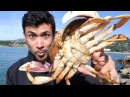 Catch and Cook DELICIOUS Dungeness Crab on the Rocks