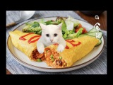 Cat's Kitchen Official Channel # 13 ENG SUB