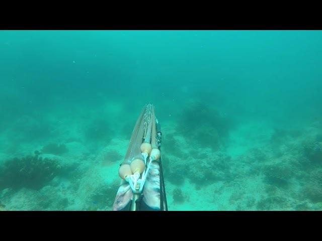 Подводная охота Филиппины, нырок на 5 м, косяк рыбы