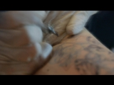 татуировка лысое чудовище (кот сфинкс) - tattoos bald monster (cat sphinx)