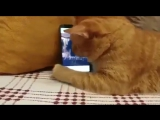 Слепой котик любит слушать именно этого пианиста