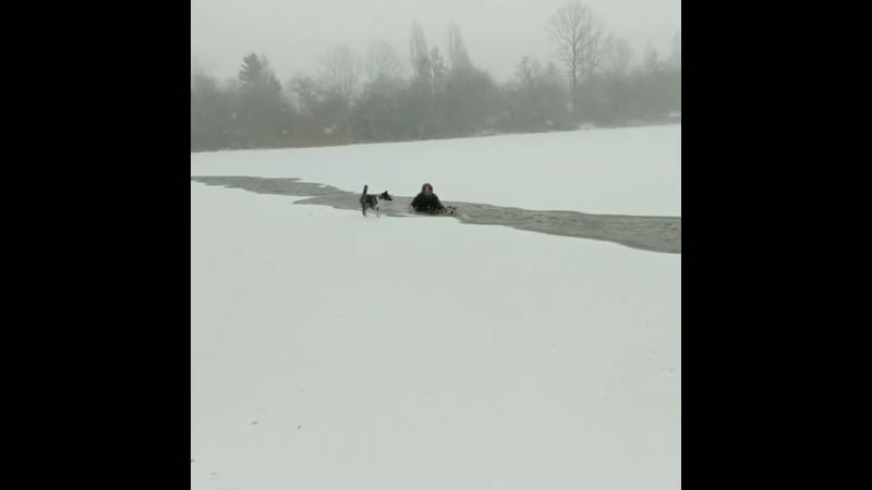 Женщина прыгнула в ледяное озеро чтобы спасти собаку Ванкувер Канада