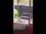 Кот открывает себе дверь