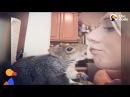 Rescue Squirrel Loves To Eat Veggies And Tuck Herself Into Bed The Dodo