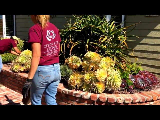 How to Remove Succulent Pups from an Agave