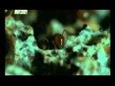 Муравьи листорезы и их изыски в еде