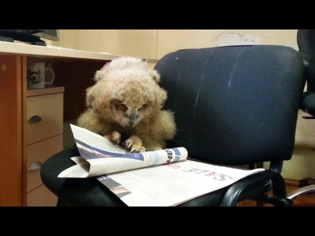 Совёнок Ёлка учится читать Внимание Сезон СОВпадений начался не забирайте совят домой