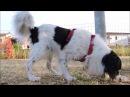 Красивая Собака   Италия   Сицилия   жива инициация