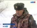 На Дону подсчитывают численность вольных русаков