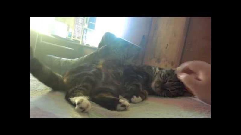 Знакомьтесь, мой кот Мур Мурыч. Грустная история дворового котейки, как он появился у меня