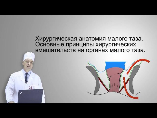 Хирургическая анатомия малого таза (Большаков, И. Н.)