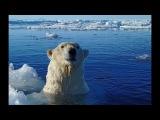 Polar Bear Hunt Fail!