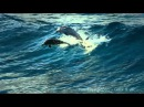 The Ocean Goldripp Remix ~ Chill Out Ibiza Vol 3 ~ Dolphins Humpbacks Love of the Ocean HD