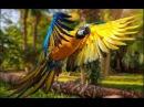Дикая природа Австралии. Большие попугаи. Документальный фильм.