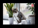 "Кошечка Мессалина из ""Муркоши"" на телеканале ""ТВЦ"""