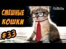 Смешные Кошки ДО СЛЕЗ Приколы с Котами 2017