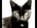 Old Black Cat - Ian Anderson