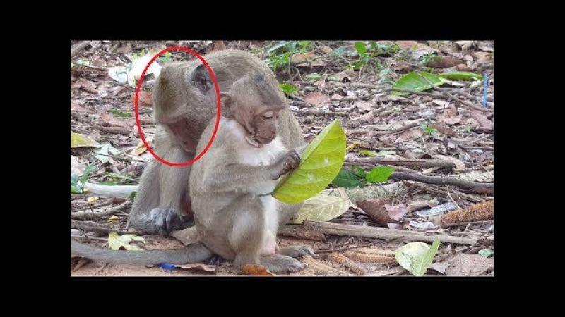 Mother monkey Sweet pea Sleeping Real life of baby monkey Animals Life part 106