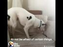 слепой и глухой пёс обрёл счастье!