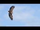 BBC Земной полёт 5 Азия и Австралия Познавательный природа орнитология животные 2012