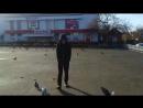 Дима и голуби #1