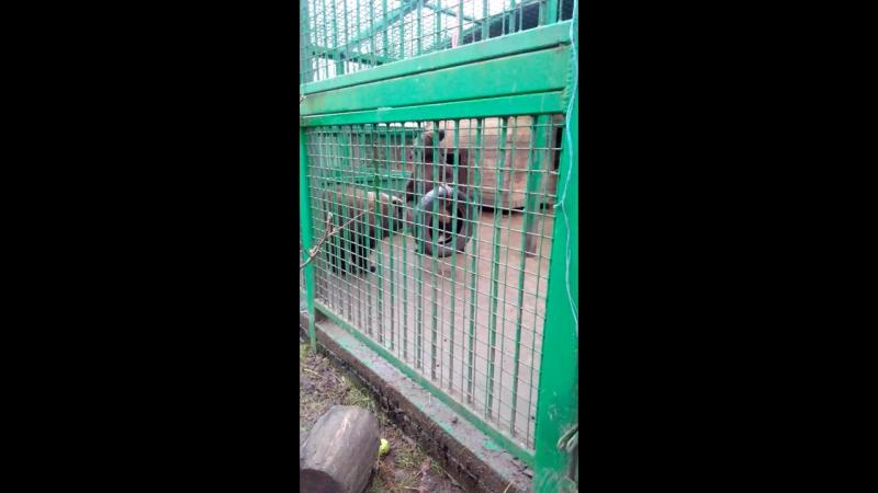 центр реабилитации жив,медвежата Маша и Даша