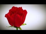 С 8 марта!!! DZirconia.com Магазин для стоматологических клиник и зуботехнических лабораторий