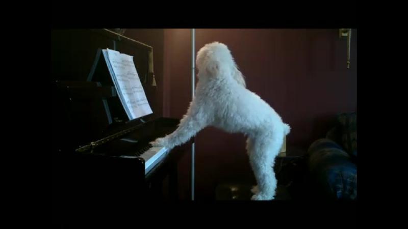 Пианист )