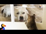 Abandoned Pit Bull 'Princess' Adopted By Cat Lady | The Dodo