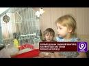 Новые подробности в деле с выселением многодетной семьи 9 телеканал Рязань