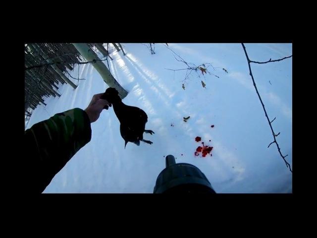 Зимняя охота на косачей с МАТАДОРОМ