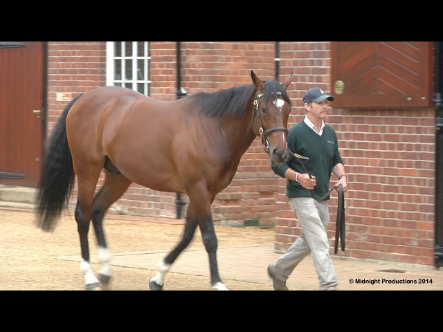 Frankel The Next Generation Part 2