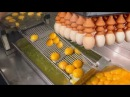 Akıllı Teknoloji, Yumurta Toplama Ayırma Paketleme Makinesi CNC Fabrika Derleme