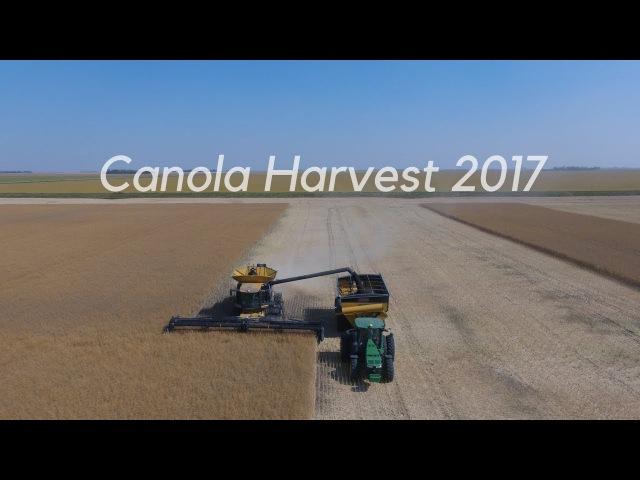 Canola harvest 2017