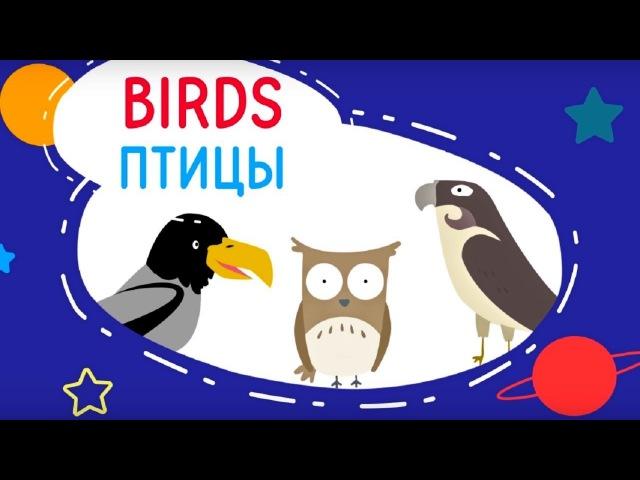 Обучающее видео для детей –Ковбой и Таратут - Birds(Птицы)– английский для детей!