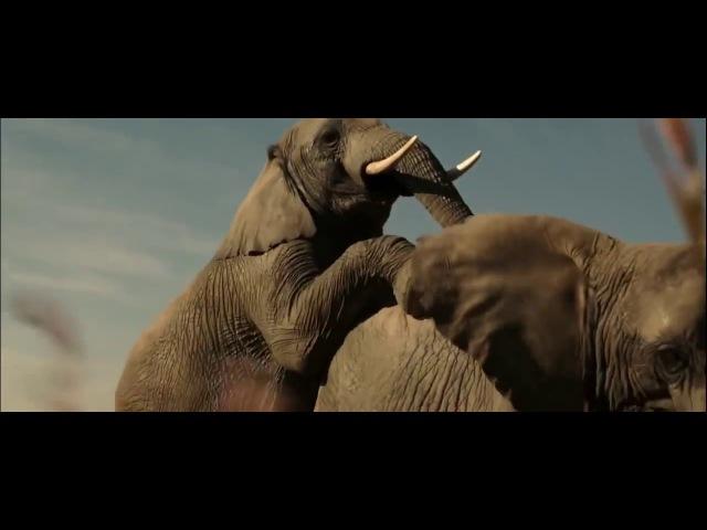 Слоны мои друзья Братья из Гримсби ПРИКОЛ ИЗ ФИЛЬМА