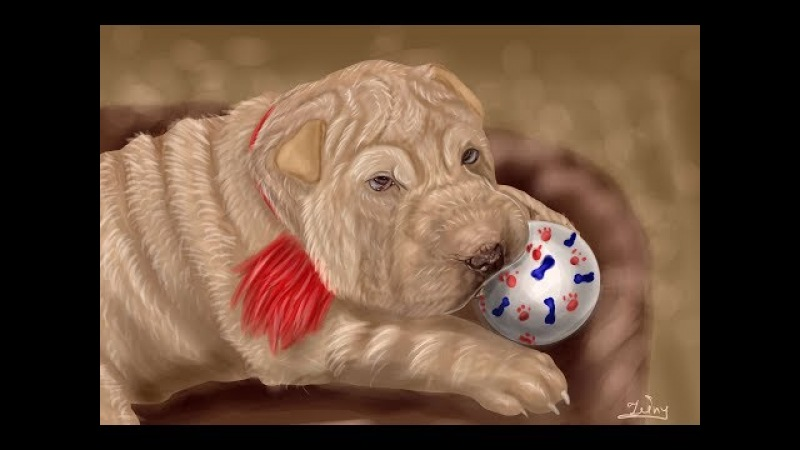 Process og drawing shar pei