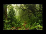Magic sounds of paradise Relaxing music and soothing sounds of the nature of forest parrots
