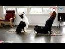 Dog Exercises with Owner Doga Exercises