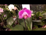 Орхидеи.Покупки из поездки в Фуд Сити и Оби.Просто краткий обзор моего окна.