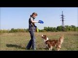 Работа на семинаре по фризби-фристайлу - австралийская овчарка Милла