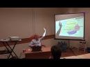 Кора больших полушарий человека: борозды, доли, зоны для ЕГЭ