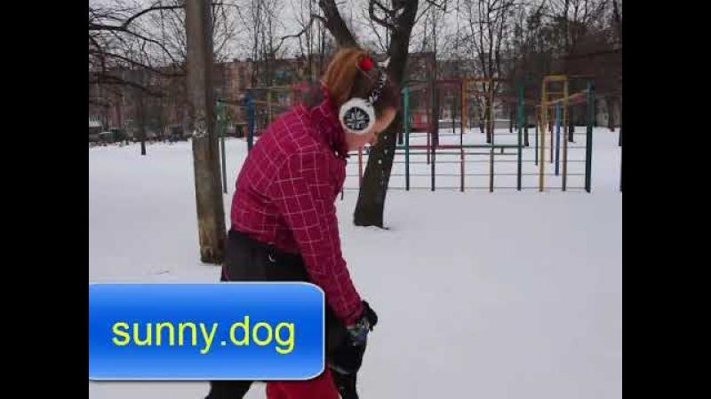 Урок 2 - Учим собаку правильно гулять. Остановка из движения