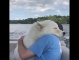 Любовь и обнимашки